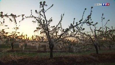 Viticulteurs et arboriculteurs luttent désespérément contre le gel