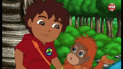 Diego et les orangs-outangs | Extrait