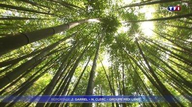 Voyage au cœur de la plus grande bambouseraie d'Europe