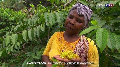Ylang-Ylang, la fleur emblématique de Mayotte