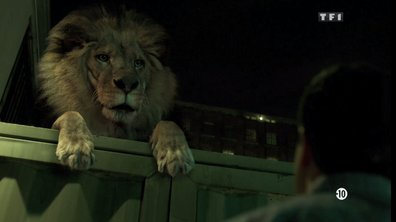 4 bonnes raisons de regarder Zoo ce soir sur TF1