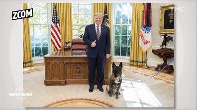 Zoom : la relation compliquée de Donald Trump avec les chiens