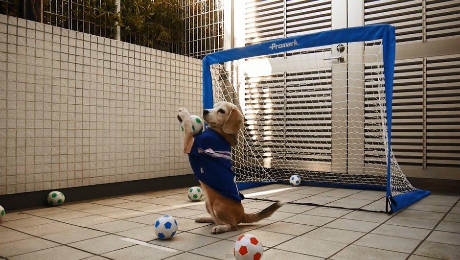 LA VIDEO DU JOUR : Ce chien est-il meilleur que Manuel Neuer ?