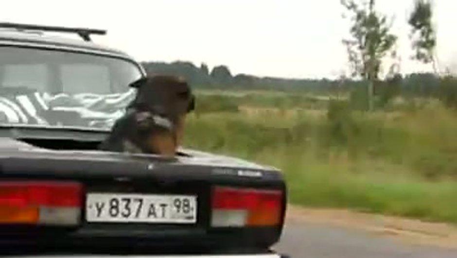 Insolite : un chien à travers un coffre d'une Lada