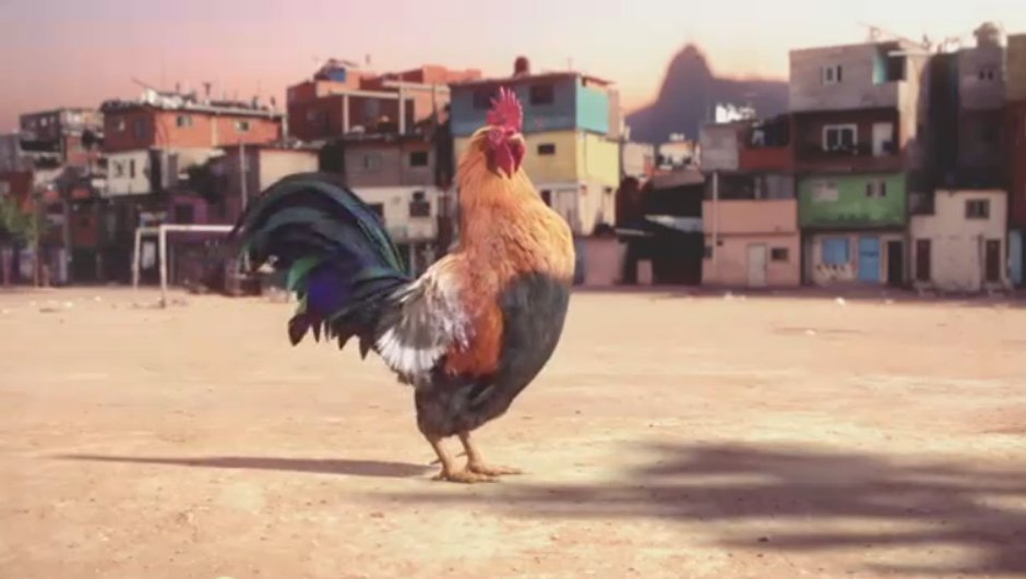 Coupe du Monde : Découvrez le Coq Samba, premier supporteur de l'équipe de France