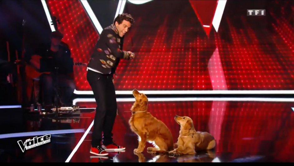 mika-perd-un-talent-part-promener-chiens-7330994