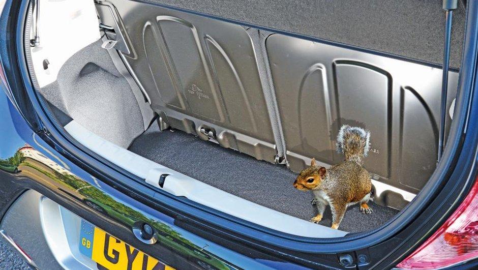 Insolite : à peine livrée, sa voiture grignotée par des écureuils