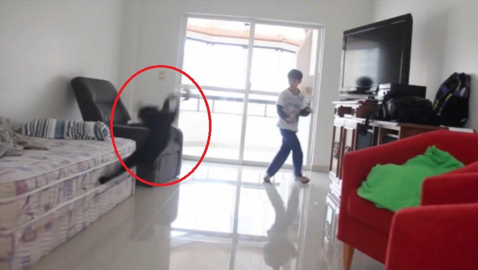 Vidéo insolite : Un chat se prend pour Taffarel et réalise une parade incroyable
