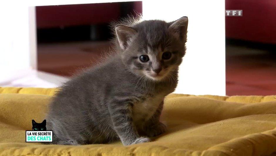 La vie secrète des chats débarque dès le dimanche 20 août